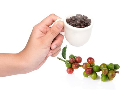 coffee berry: Hand hold cup of coffee beans with coffee berry isolated on white background