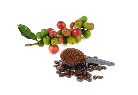 coffee berry: coffee berry and coffee bean on white Stock Photo