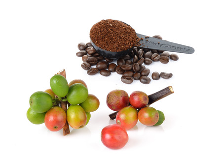 coffee berry: coffee berry and coffee powder on white