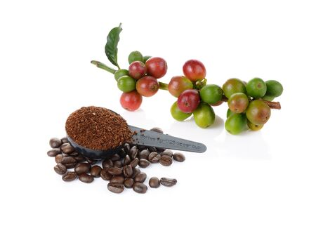 coffee berry: coffee berry and coffee beans on white background