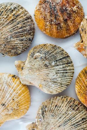 petoncle: seashells de pétoncles surgelés