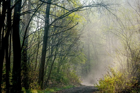 fog forest: Road and fog and the silhouette of trees forest fog morning field