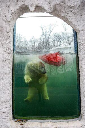The she-bear and the bear cub play