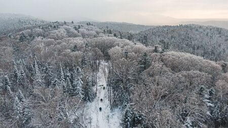 Aerial view of a winter snow-covered pine forest. Winter forest texture. Stockfoto - 138258916