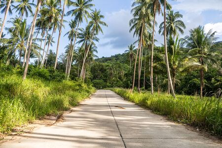 Concrete road through the forest between the palm trees