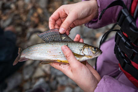 A fisherman holds a grayling fish in his hand.
