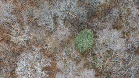 Aerial view of the forest of Rambouillet in winter. trees top view Stockfoto