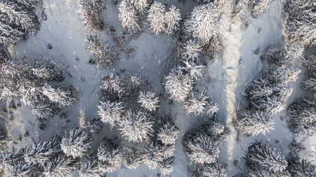 Winter forest with snowy trees, aerial view. Winter nature, aerial landscape with frozen river, trees covered white snow Stockfoto