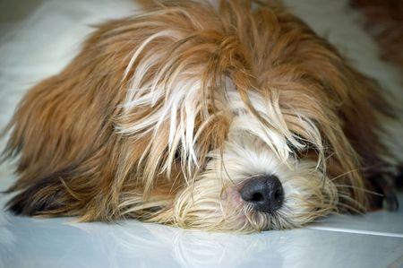 My dog at my home.