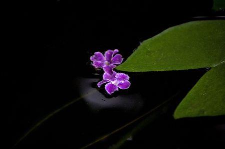 Purple flower in water.