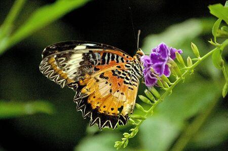 Butterfly in my garden. Stock Photo
