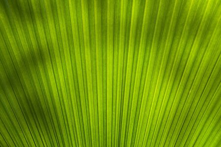 One of the pattern on the palm leaves. Stock Photo