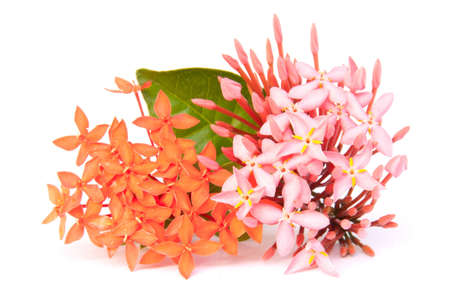 Ixora flower on isolate background