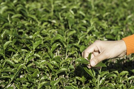 Woman shoots green tea extract.