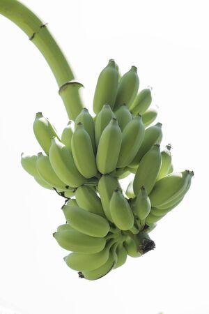 Banana fruits on isolated background.