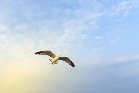 Meeuwen vliegen in de zee. Stockfoto