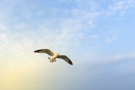 Seagulls are flying in the sea. Stock Photo