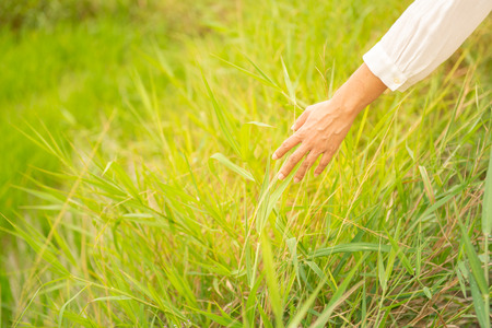 Hand of a woman touching grass on the morning and She feel happiness. ​