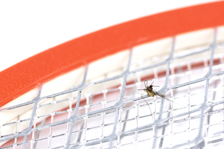 Mosquito dead on handle electric swatter, Shock mosquito with electrical. Фото со стока