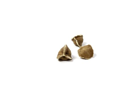 Moringa Oleifera seeds dried on isolated white background. Healthy super food. 写真素材