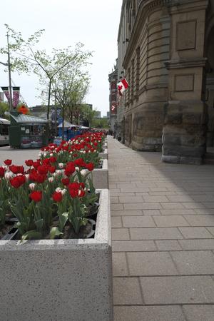 Sidewalk on Elgin street in Downtown Ottawa Ontario on May 21, 2016. Editorial