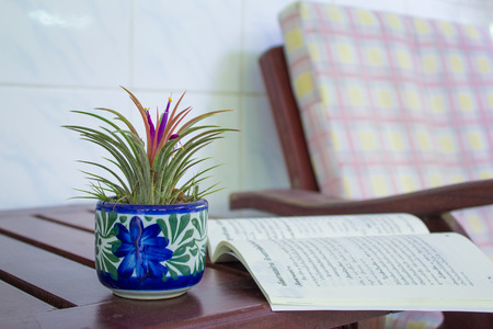 vriesea: pink pollen of Ananas bracteatus in flowerpot has relax time.