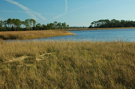 The grass flats near Shell Mound Archaeological site near Cedar Key, Florida, on the Gulf of Mexico. 스톡 콘텐츠