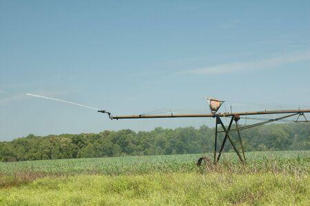 Un regador pulverizadores de agua en el campo de maíz. Foto de archivo - 404525