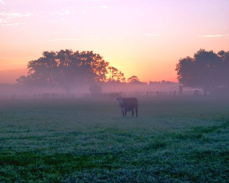 Sunrise over a field in the rural South.