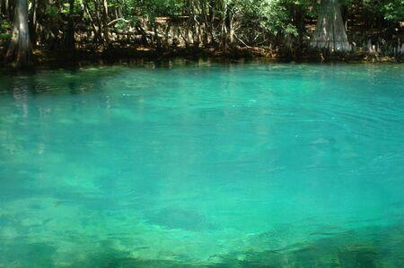 春の沸騰チーフランド、フロリダのマナティー スプリングス州立公園で。 写真素材