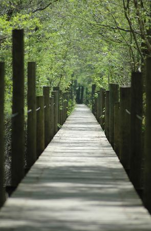 The boardwalk that leads to the Suwannee River near Old Town, Florida. Foto de archivo