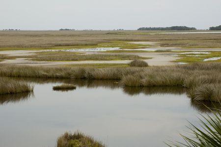 フロリダ州のメキシコ湾上の草干潟の鳥. 写真素材