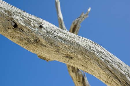 Driftwood against a blue sky.