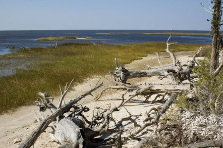 Driftwood on Shired Island Beach, Dixie County, Florida. photo