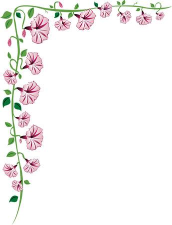 bordure vigne: Un matin, la gloire de vigne fronti�re avec des fleurs roses, les feuilles et les bourgeons.
