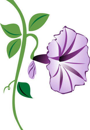 A purple morning glory flower with leaves and a bud. Ilustração