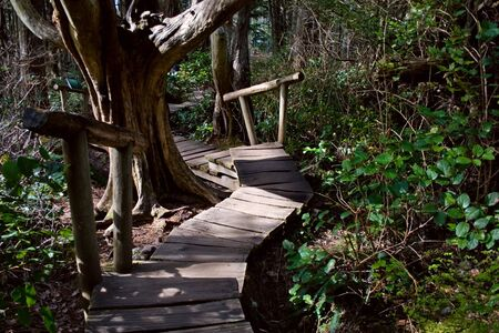A boardwalk through the northwest rainforest leading to Cape Flattery, Washington, the northwestern-most point in the continental U.S. Stock Photo - 4634515