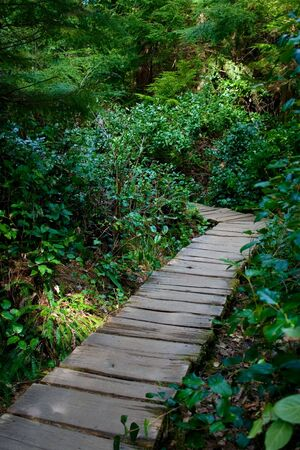 A boardwalk through the northwest rainforest leading to Cape Flattery, Washington, the northwestern-most point in the continental U.S. photo