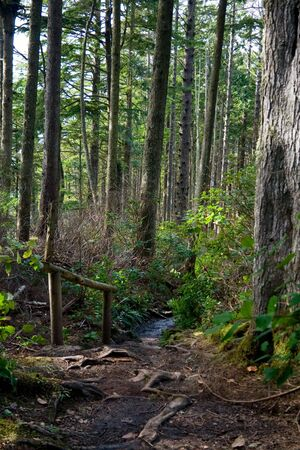 flattery: A pathway through the northwest rainforest leading to Cape Flattery, Washington, the northwestern-most point in the continental U.S.