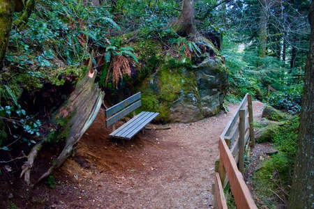A bench to rest while hiking the rugged trail in the Mt. Baker-Snoqualmie National Forest. Stock Photo - 4772435
