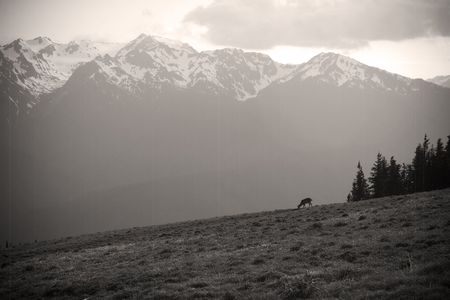 olympus: Mount Olympus and neighboring peaks at Hurricane Ridge in the Olympic National Park, near Port Angeles, Washington, USA. In old-fashioned sepia tone.