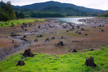 Acres of dead cut tree stumps on river banks in the mountains. Foto de archivo