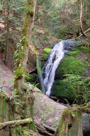 Coal Creek Falls, near Newcastle, Washington, in the Tiger Mountain State Park. Stock Photo - 6876220