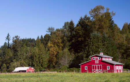 red horse: A pair of red barns in the rural western Washington summer. Stock Photo
