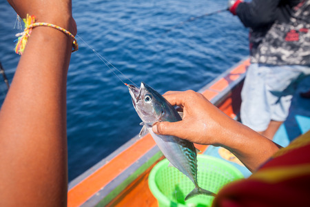 hand line fishing: fisherman holding tuna fish on hand with hook on the boat in andaman sea