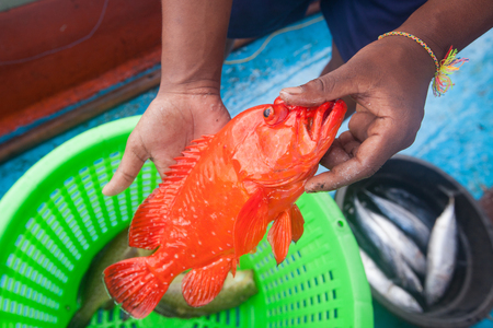 hand line fishing: fisherman holding red grouper fish on the fishing boat