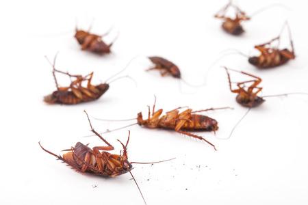 scarafaggio morto su sfondo bianco