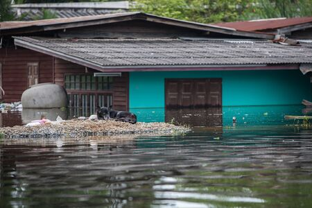 wade: Nonthaburi flood in Thailand 2011-The lifestyle of people in massive flooding, Nonthaburi in Thailand, October 28, 2011 Editorial