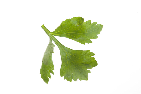 apium graveolens: close up celery leaves isolated on white background. Stock Photo
