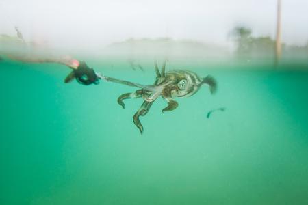 Squid stick the hook Of fishermen.
